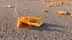 Dry leaf moving in windy weather 4K UHD Stock Footage