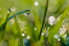 Dew on the grass. - stock photo