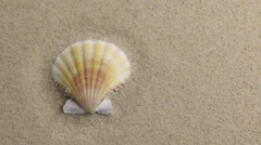 Wind blowing on the sand and opening yellow seashell Stock Footage