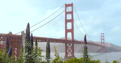 Golden Gate Bridge with Flowers and Hummingbirds Summer Day 4k Stock Footage