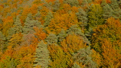 4K Aerial: Rear Lift Above Colorful Forest in Autumn Stock Footage