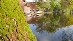 Mossy tree in front of a reflecting Pond and Stables Stock Footage