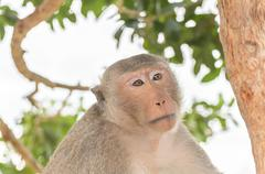 Portrait of a monkey in wildlife - stock photo