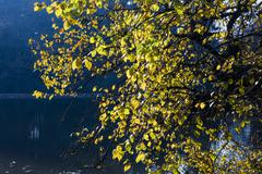 The leafy tree in the morning and the Pond - stock photo