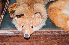 Antique fox stole - stock photo