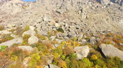 Aerial View Autumn Forest in Mountain Stock Footage
