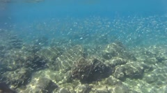 Beautiful underwater view with school of baby fish  Stock Footage