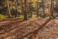 Sunny autumn day in the woods - stock photo
