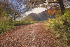 Path of fallen leaves Stock Photos