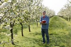 Farmer or agronomist in cherry orchard - stock photo