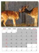 Wildlife calendar june  print page layout Stock Illustration