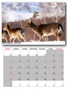 Wildlife calendar january  print page layout Stock Illustration