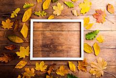 Autumn leaf composition Stock Photos