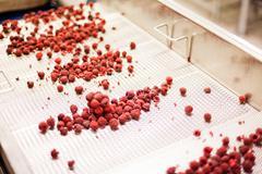 Frozen raspberry processing business Stock Photos