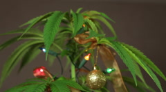 Stock Video Footage of Cannabis Christmas plant