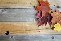 Autumn Maple Leaves Framing Rustic Wood Background Stock Photos