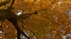 Autumn treetops in the forest Stock Footage