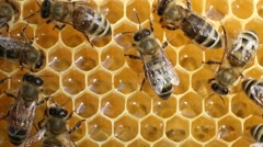 Work bees in hive 1V3A2389 K OS Stock Footage