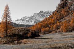 Autumn colors at the Devero Alp Stock Photos