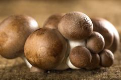 Brown Baby Bella Mushrooms - stock photo