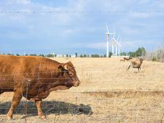 Bovine Turbines country Stock Photos