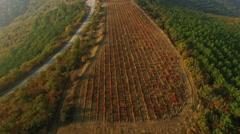 Aerial View Autumn Vineyard Stock Footage