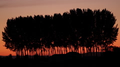 Silhouette of trees at sunset - stock footage