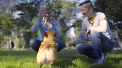 Gay Couple Practice Dog Tricks With Their Corgi In Park, For Treat Stock Footage