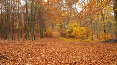 Autumn fall park forest landscape steadicam 4K. - stock footage