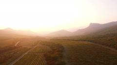 Aerial View Autumn Vineyard Field Stock Footage