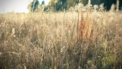 Nonurban rural autumn landscape, colorful fields, grass. Healthy ecology Stock Footage