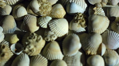 Little, beautiful sea shells with sand and back light, rotation, on black Stock Footage