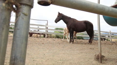 Stock Video Footage of Mother Horse & Her Foal.