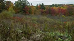Stock Video Footage of Fall Foliage in New England, Field with Trees Panning Shot, Establishing