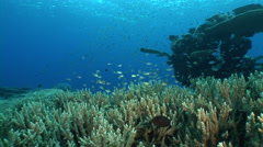 Coral reef and school of fish - stock footage