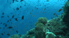 Beautiful underwater scene Stock Footage