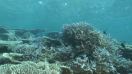 Stock Video Footage of Beautiful coral reef and school of fish