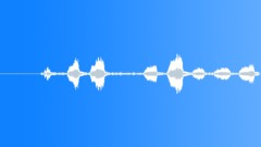 Squawking Bird Noise Sound Effect