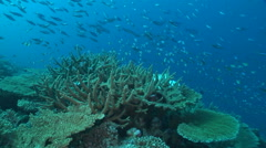 Beautiful coral reef and school of fish - stock footage