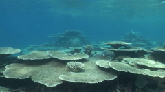 Moving on coral reef - stock footage