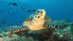 Close up turtle - stock footage