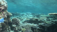 Stock Video Footage of Moving on coral reef