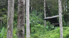 Bamboo hut in the jungle, view from below. with sound Stock Footage