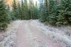 Rural dirt road and rime - stock photo