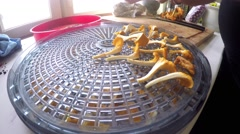 Placing yellow chanterelles on a vegetable dryer machine Stock Footage