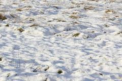Field with undulating snow cover and grass tufts Stock Photos