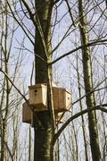Multi wild bird nesting box development Stock Photos