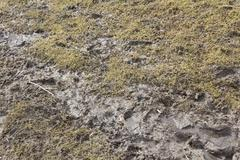 Patch of muddy grass Stock Photos