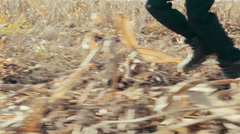 Boy running among the field, boy runs to the sun on the yellow corn. Close up Stock Footage