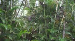 4K Tropical Rain Soaks Green Palm Tree Leaves Stock Footage